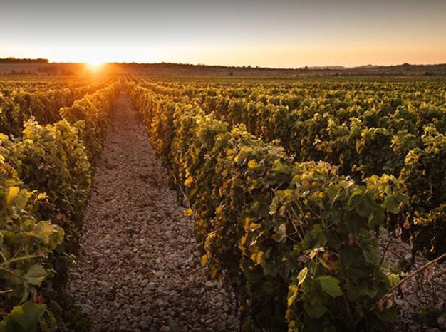 Winery Nuic